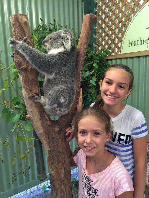 Australia-Coala-Wildlife-Park-Featherdale