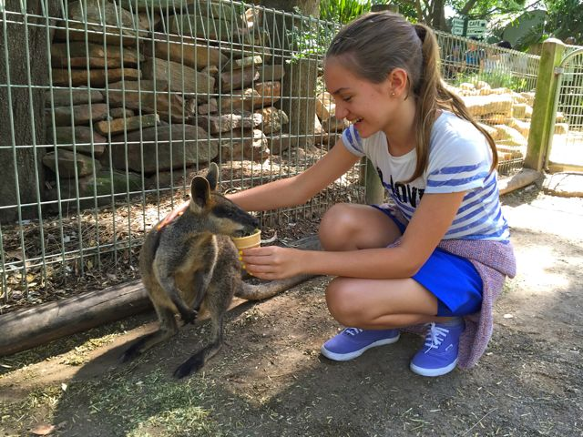 Australia-Wildlife-Park-Featherdale-Canguru