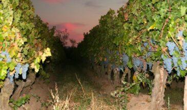 Chile vinhos
