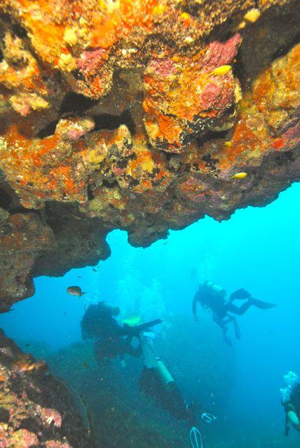 Desvendar os mistérios e belezas do fundo do mar está entre as experiências mais arrebatadoras que se pode ter.