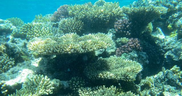Maragogi-costa-dos-corais
