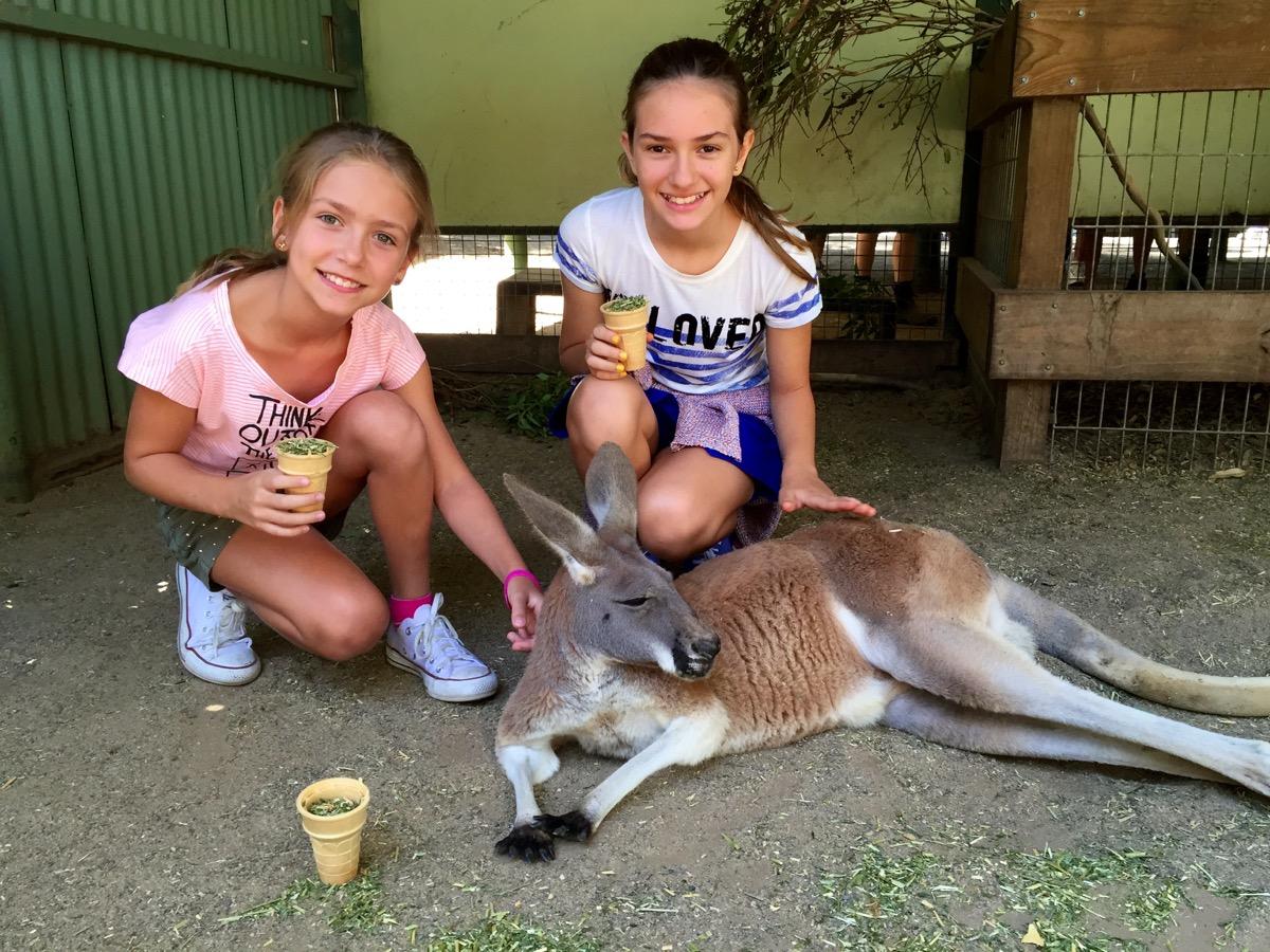 Canguru Sydney