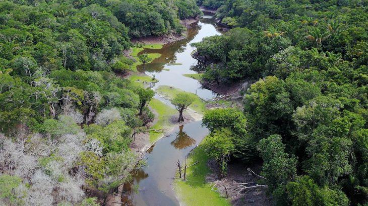 O que fazer em Anavilhanas Amazônia