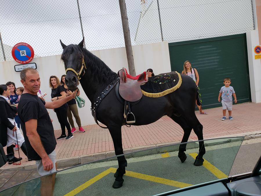 Cavalo menorquino Menorca