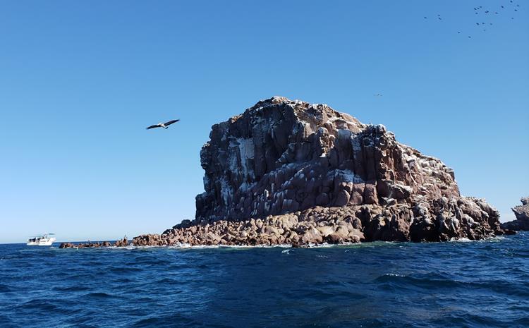 Ilha espíritu santo la paz mexico