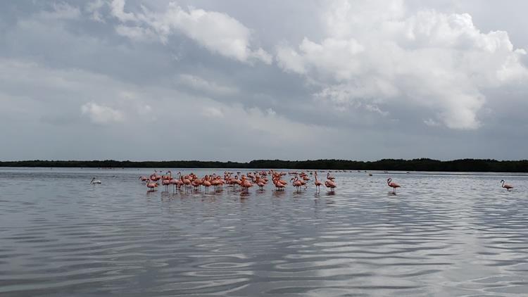 Rio Lagartos México