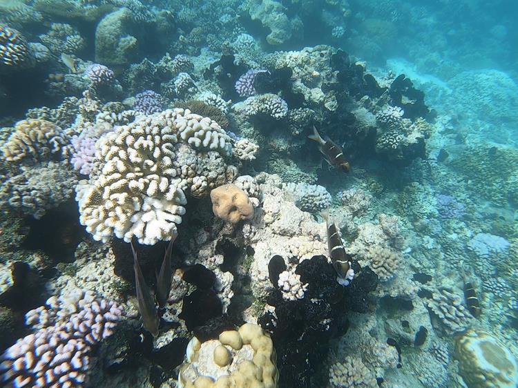Corais polinésia francesa