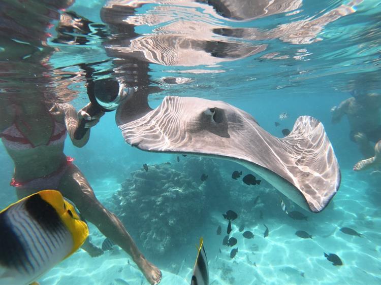 Moorea tubarôes e arraias