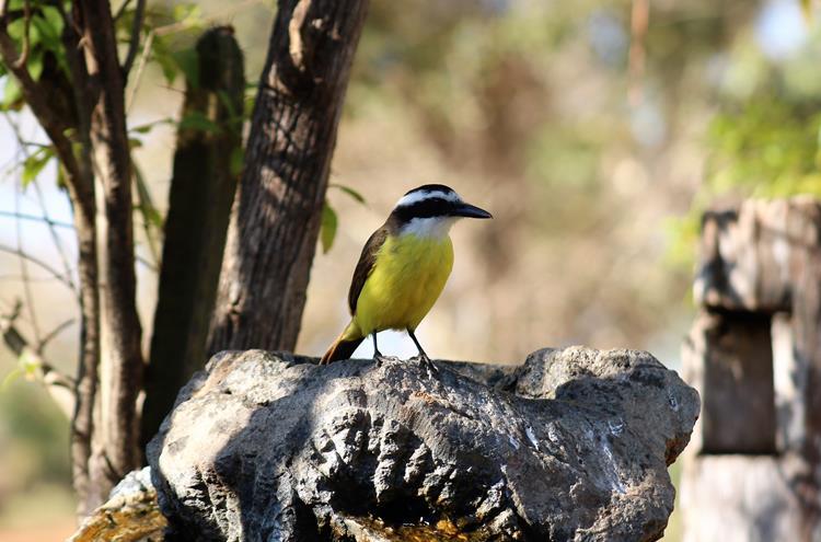 O que fazer no Pantanal