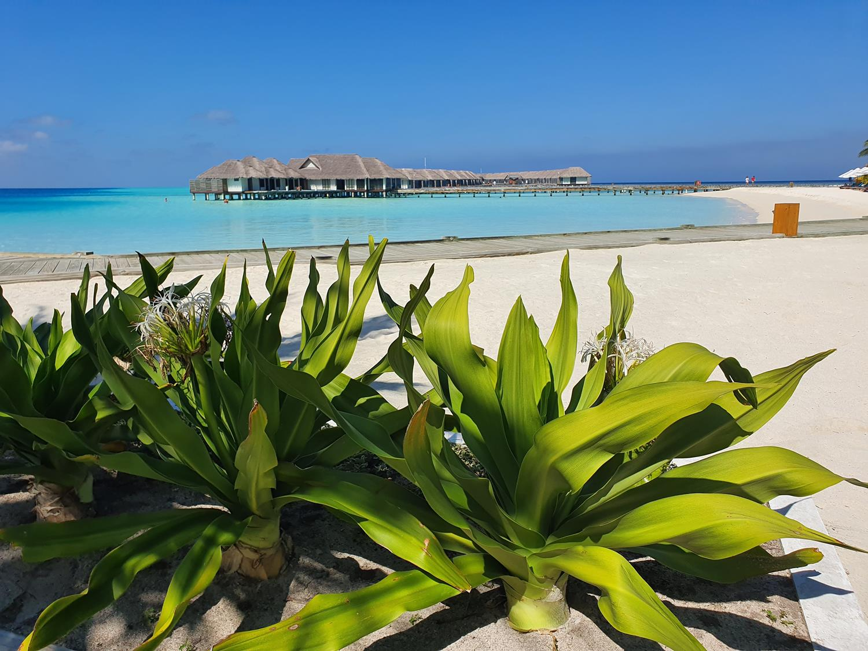 Dicas Maldivas