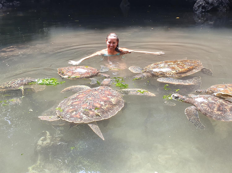 nadar com tartarugas