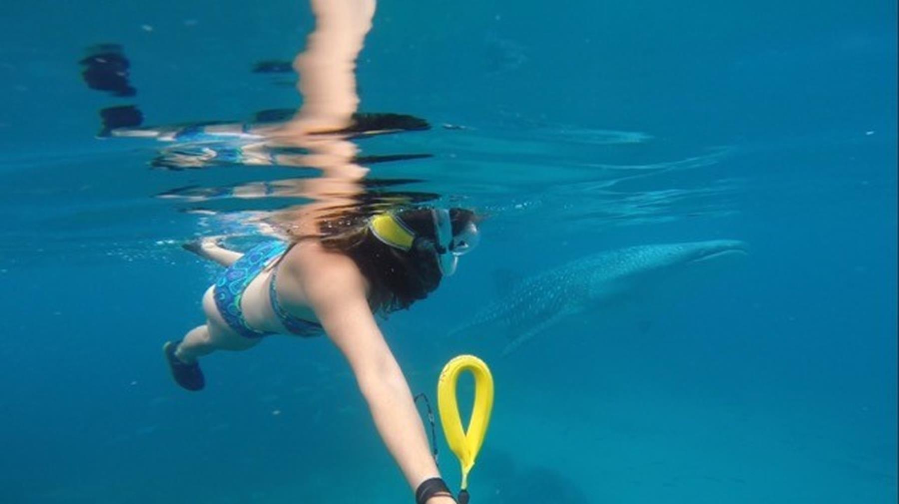 mergulho tubarão baleia