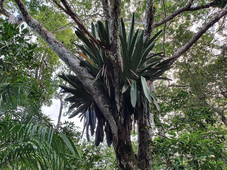 Trilha das Bromélias Maraú