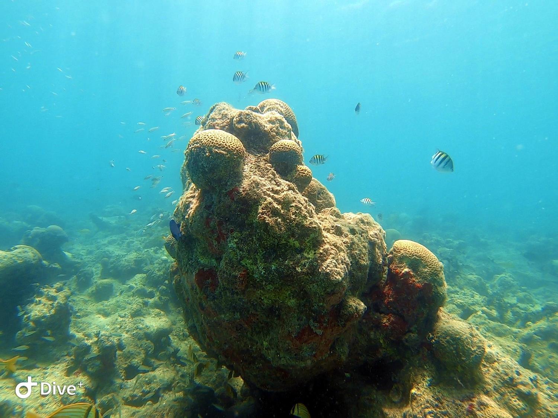 coral em abrolhos