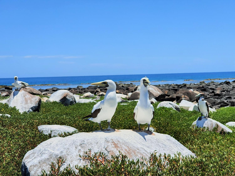 Ilha Siriba Abrolhos
